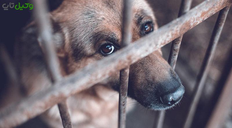 آیا حیوان آزاری جرم است